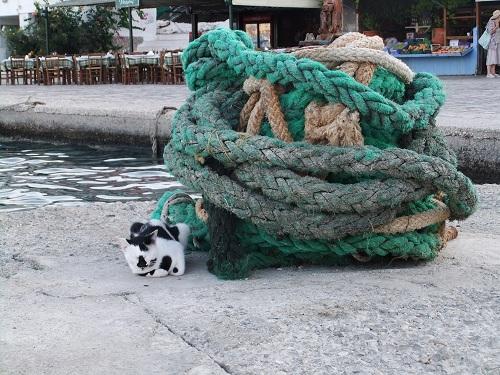 ハルキ_港のそばの猫さん (4)