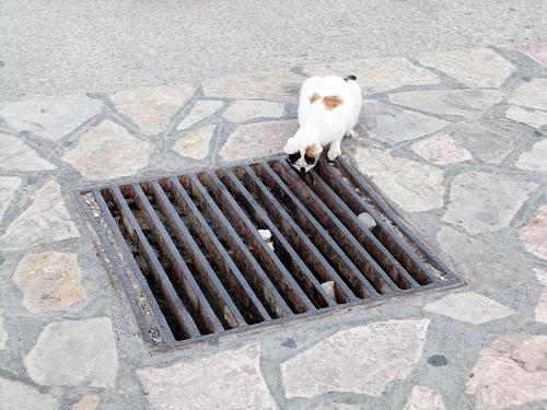 ハルキ_港のそばの猫さん (2)