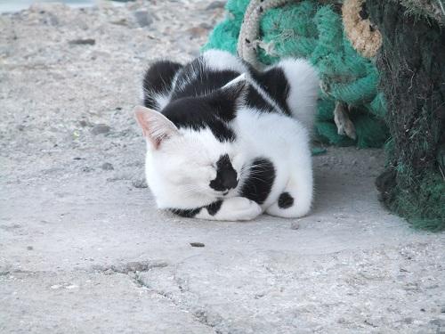 ハルキ_港のそばの猫さん (1)