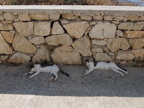フォレガンドロスの猫さん (3)