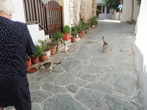 フォレガンドロス_ホラの猫さん (3)