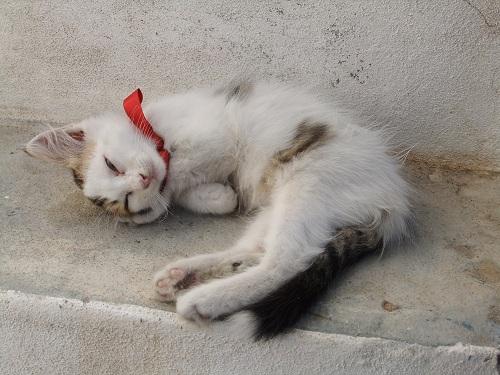 フォレガンドロス_ホラの猫さん (1)