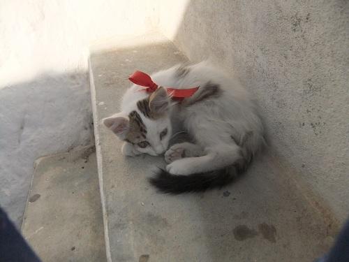 フォレガンドロス_ホラの猫さん (2)