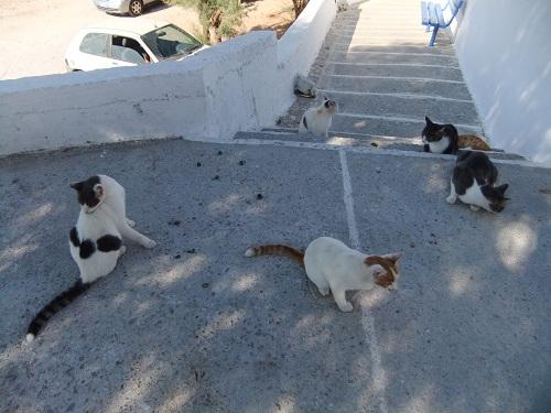 フォレガンドロス_パイに気付いた猫さん
