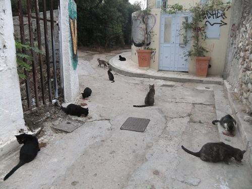 アテネ_プラカの猫給食