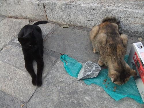 アテネ_風の塔で猫給食 (1)