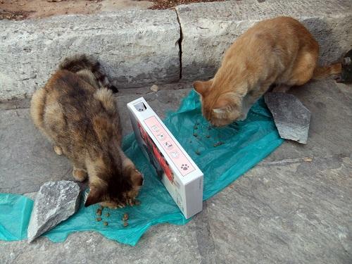 アテネ_風の塔で猫給食 (2)