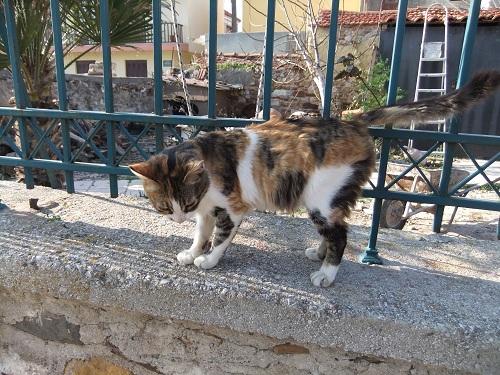 ヒオス・タウンの猫さん (3)