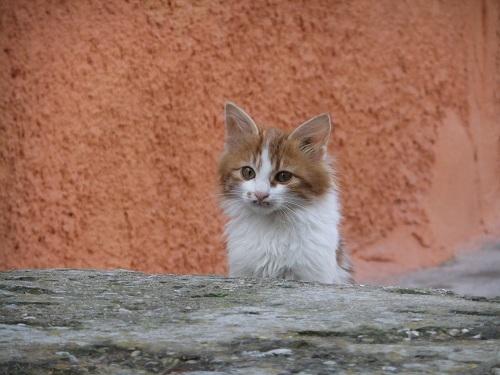 ヒオス・タウンの猫さん (2)