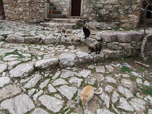 ヒオス_ネア・モニの猫さん