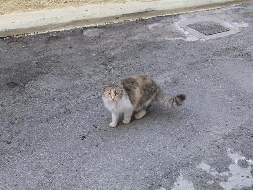 ヒオス_カストロの猫さん (1)