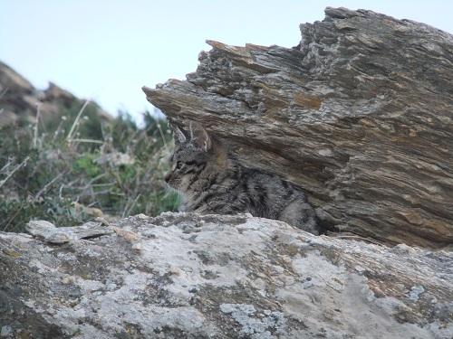 イオス_ミロポタスの猫さん (2)