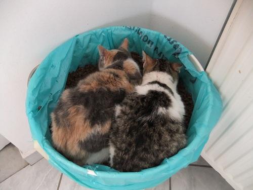 イオス_ともちゃん家の猫さん (1)