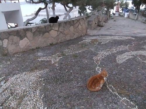 ミロス_アダマスの猫さん (1)