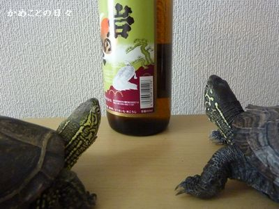 P1080749-sake.jpg