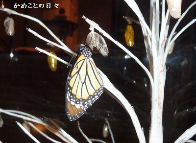 P1090639-treebata.jpg