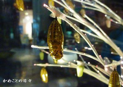 P1090646-treesanagi.jpg