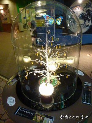 P1090672-tree.jpg