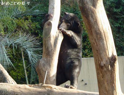 P1100432-bear.jpg
