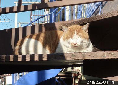 P1110279-cat.jpg