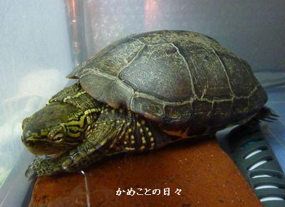 P1120942-suke.jpg