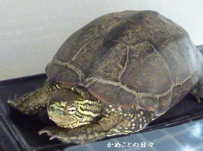 P1130633-suke.jpg