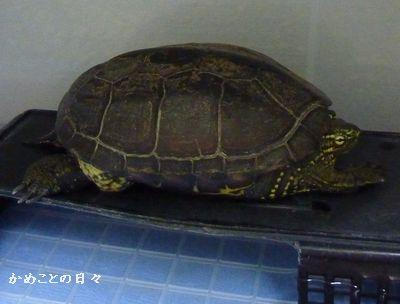 P1140133-suke.jpg