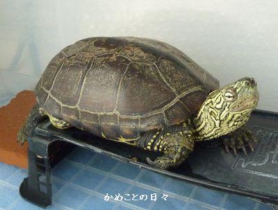 P1140780-suke.jpg