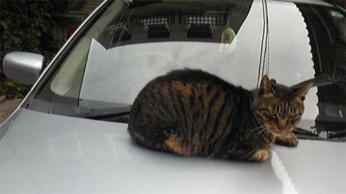車の上のネコ