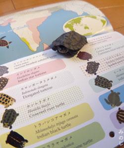 亀カレンダー
