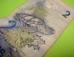 ブラジル亀札