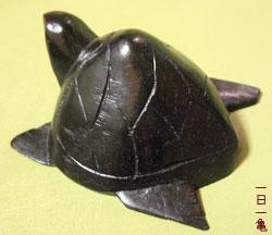 スリランカの亀