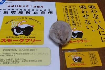 ryou 20100401_812