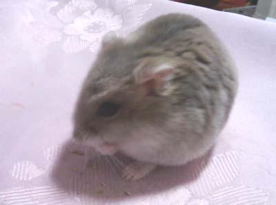 lami 2010-08-14 14.27.34