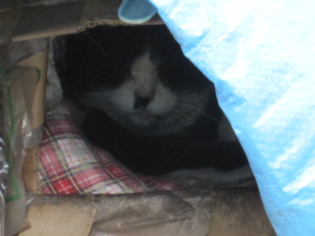 陰ながら見守るネコ