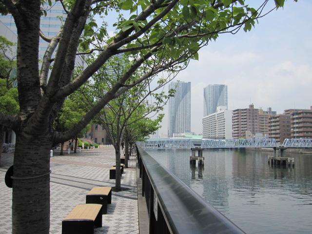 朝潮運河とさくらんぼ散歩道