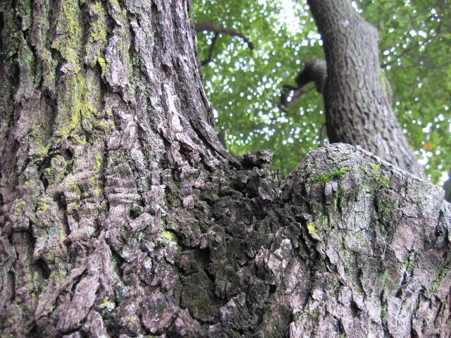 街路樹 表面