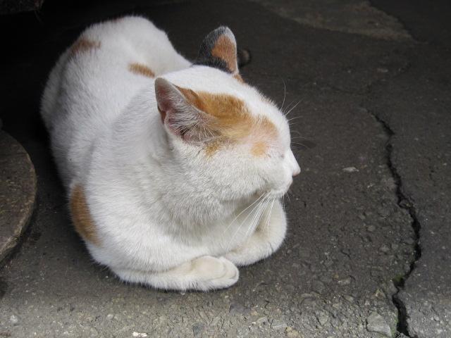 場外のネコ3