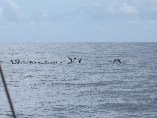 海のカモメ軍団