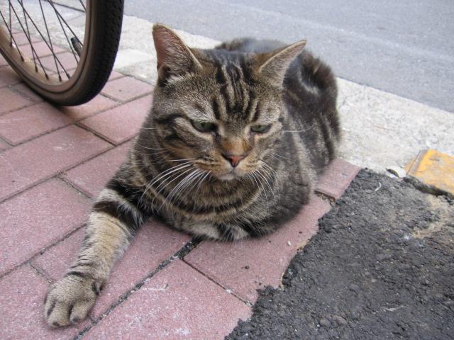 右前足をだしたままのネコ