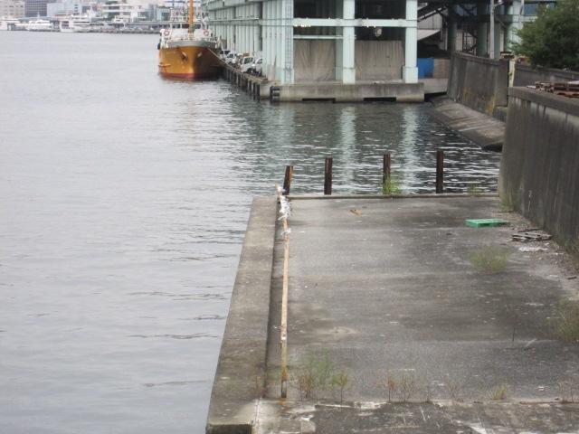 朝の隅田川。築地側