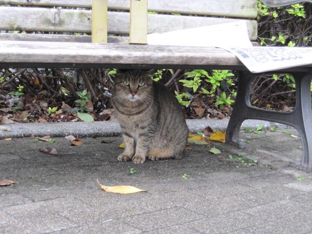 ベンチの下のネコ