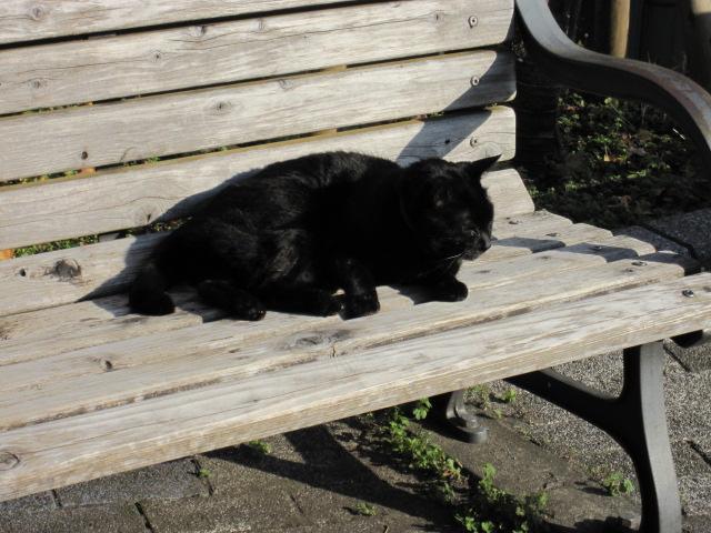 ネコ王の黒王号