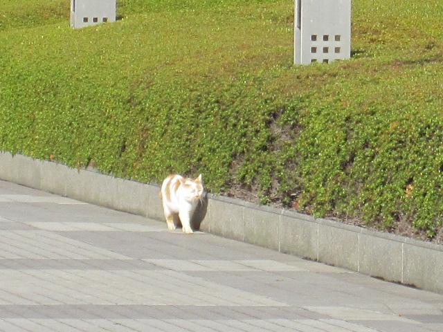 振り返ればネコがいる