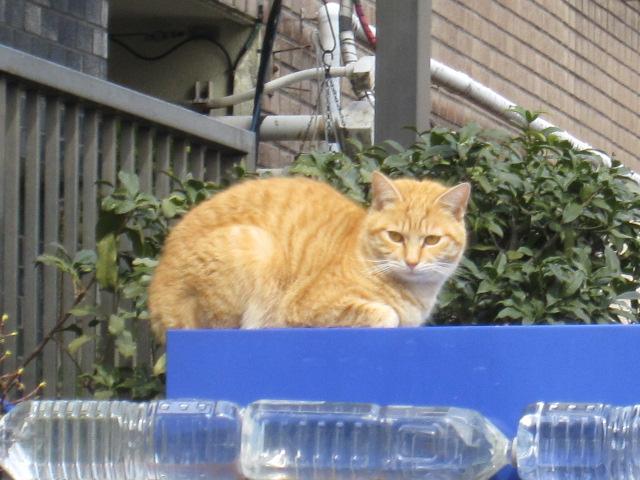 効かない効かないネコには効かないペットボトル