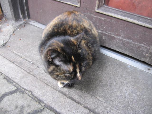 銀座 丸まった猫
