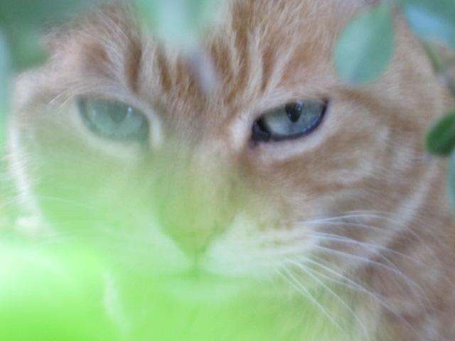 生垣のネコ1