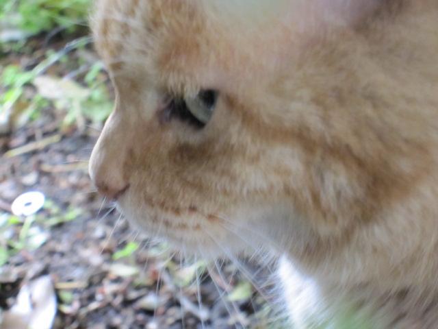 生垣のネコ2