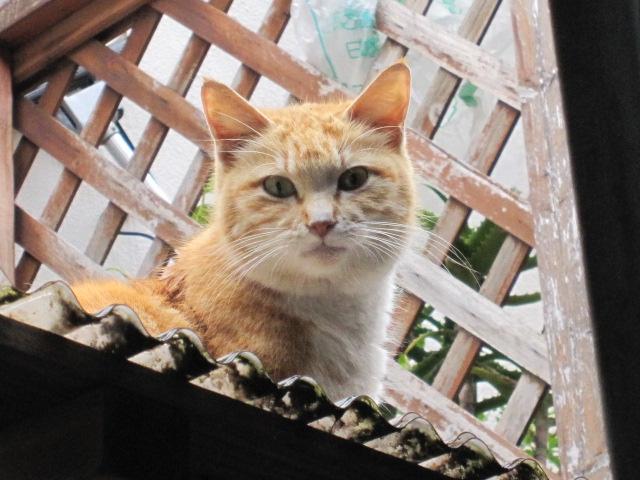 見つめるネコ2