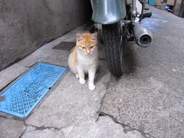 ひいてる子猫1